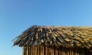 Construcciones de madera de cactus