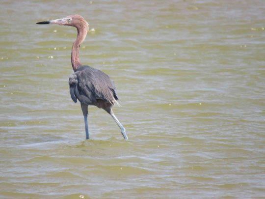 Bird-nature-Mayapo